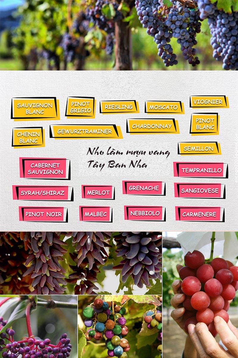 Các loại nho để làm rượu vang Tây Ban Nha