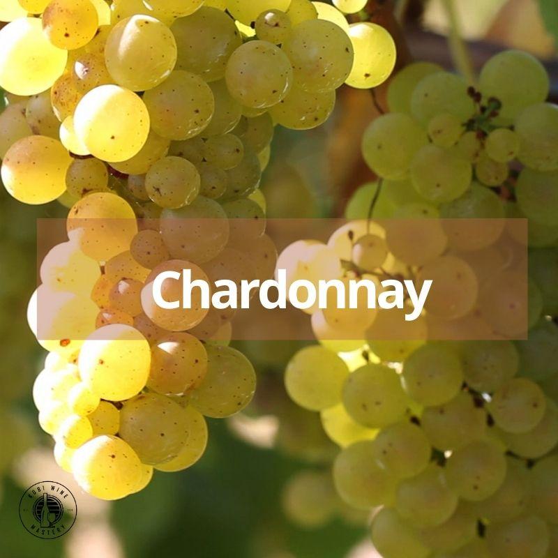 giong nho Chardonnay