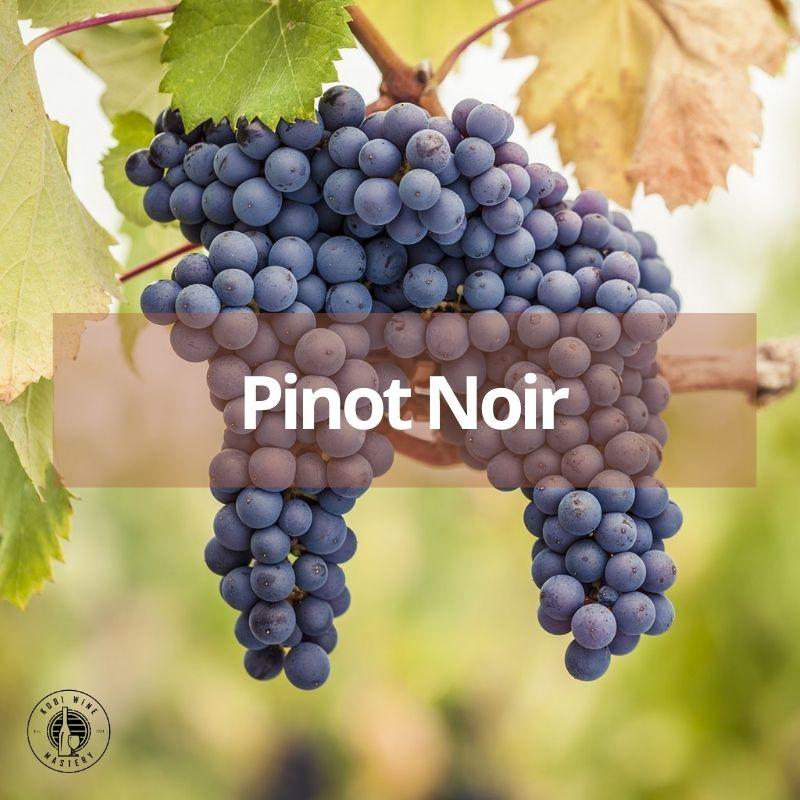 giống nho làm rượu vang đỏ Pinot Noir