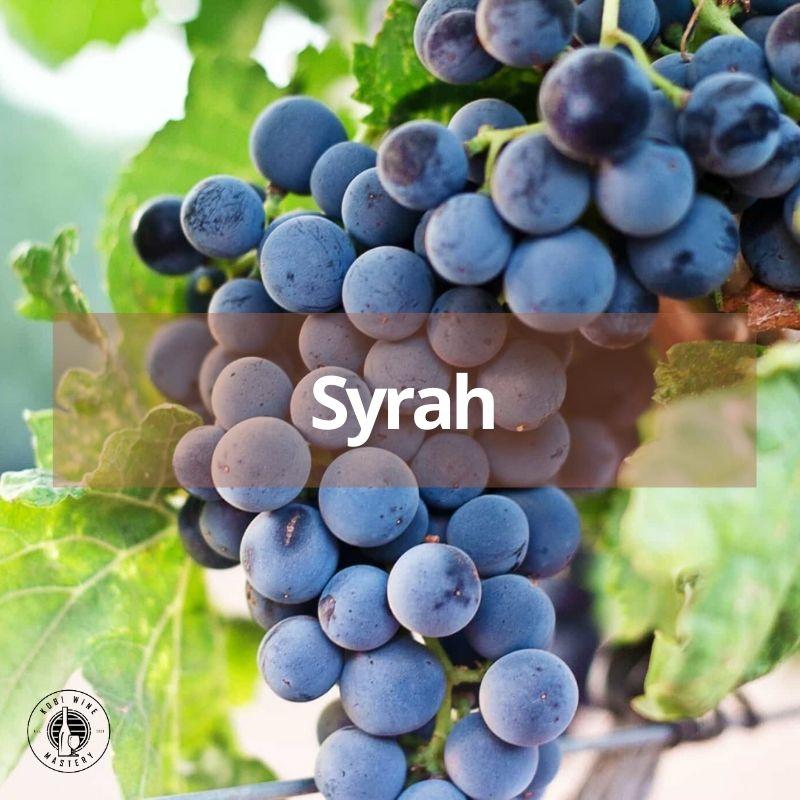 Giống nho làm rượu vang đỏ huyền thoại Syrah