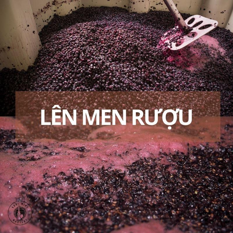 Quy trình lên men rượu vang