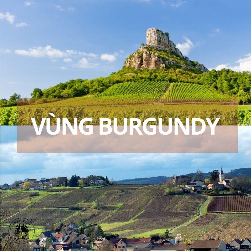 rượu vang pháp vùng burgundy