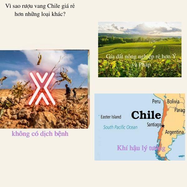 Vì sao rượu vang Chile rẻ